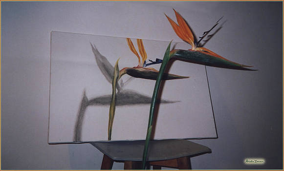 Draw the bird of paradise flower by Ariela Zman