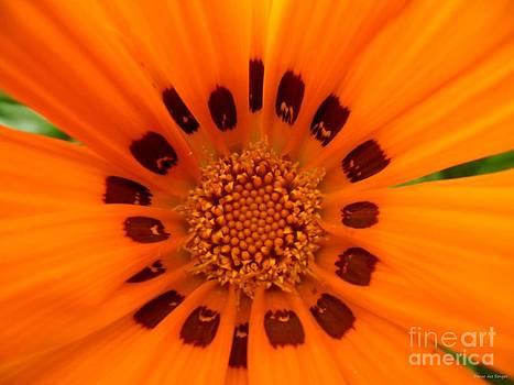 Dream Flower Summer Photograph by Danse DesSonges