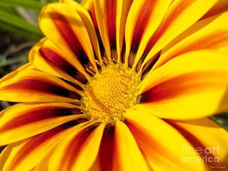 Dream flower sun photograph by Danse DesSonges