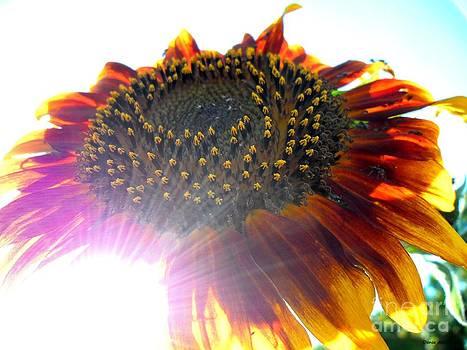 Dream flower sunshine photo by Danse DesSonges