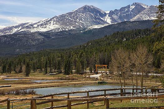 Dream Ranch by Erika Weber