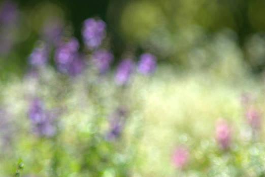 Dream Series - Lavender Love by Judy Salcedo