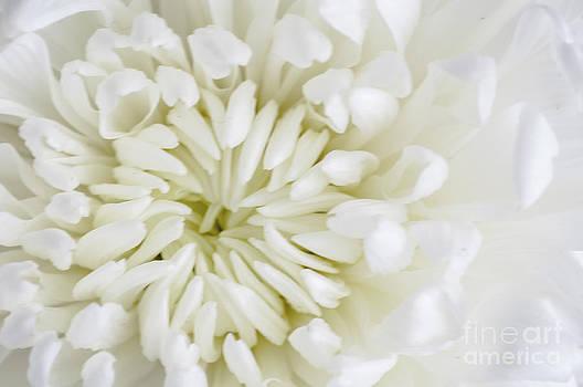 Steve Purnell - Dreaming In White