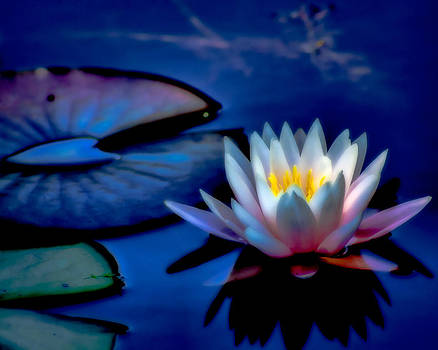 Dreaming of a Waterlily by Lynne Jenkins