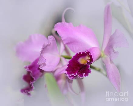 Sabrina L Ryan - Dreaming of Orchids