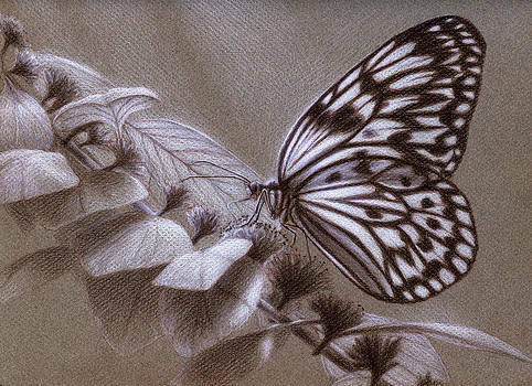 Dreams Sketch by Shawn Kawa