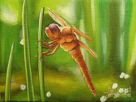 Dreamtime Dragonfly by Gayle Utter