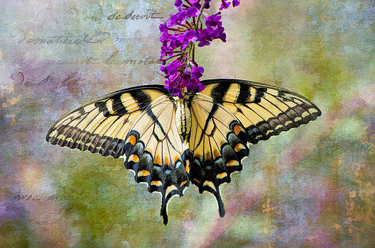Dreamy Butterfly by Bonnie Barry
