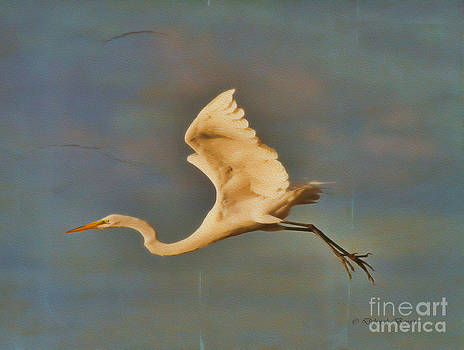 Deborah Benoit - Dreamy Egret Flight