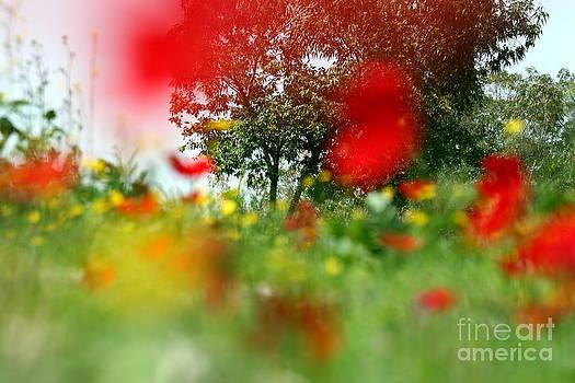 Dreamy Field by Arie Arik Chen