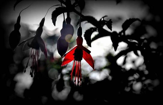 Dreamy Fuchsia by Florian Walsh