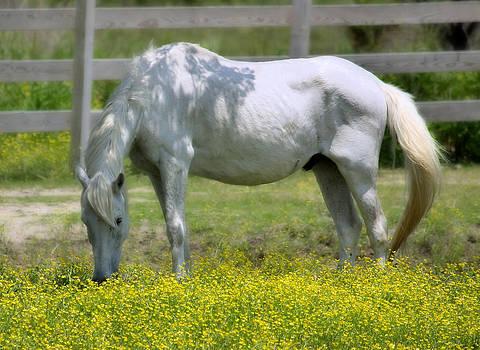 Mary Almond - Dreamy Pony