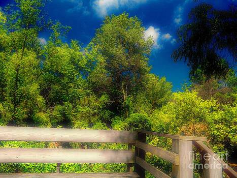 Dreamy Treetop View by K L Roberts