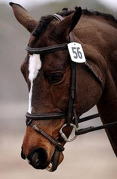 Dressage Horse Concentration  by Olde Time  Mercantile