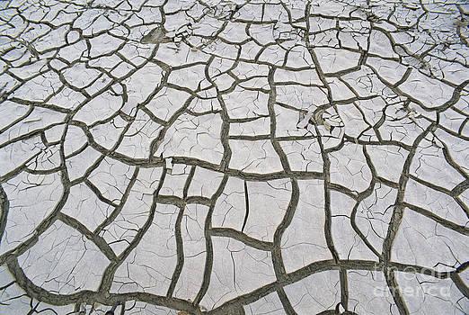 James Steinberg - Dried Mud In Texas