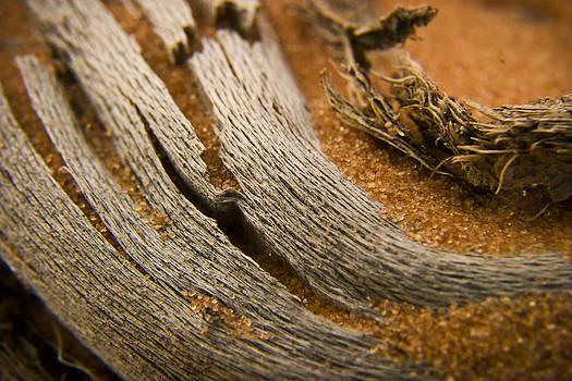 Adam Romanowicz - Driftwood 2