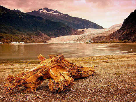 Driftwood at Mendenhall Glacier by Bill Boehm