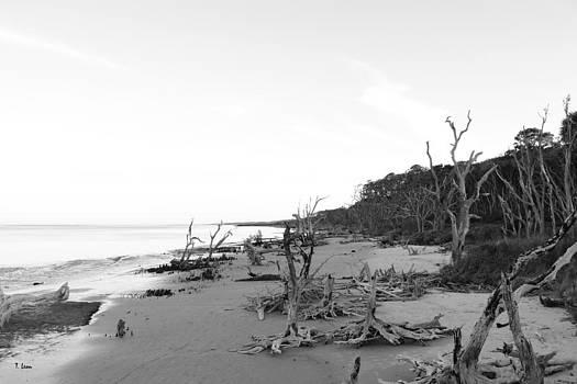 Driftwood Beach by Thomas Leon