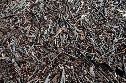 Donna Blackhall - Driftwood Shrapnel
