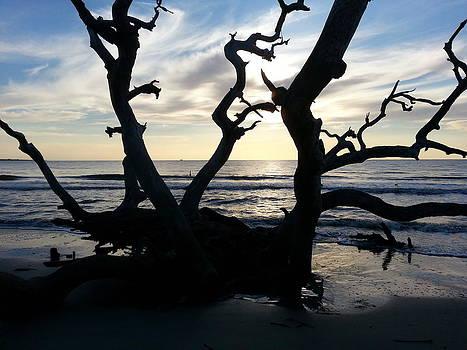 Drifwood Beach by Sheri Heckenlaible