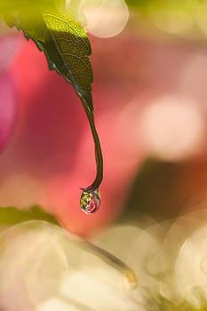 Drip Drop by Roxanna Coeling