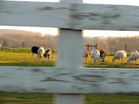 Drive By Fenced Animals by Dianne Furphy
