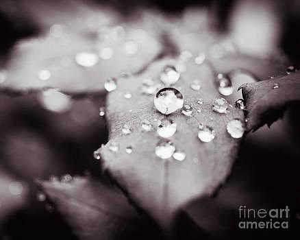 Lisa McStamp - Droplets