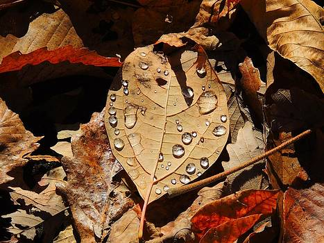 Droplets on Leaf by Phil Penne