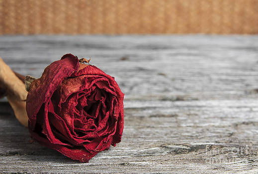 Dry Red Rose For Memorial On Ancient Wood Table by Pakorn Kitpaiboolwat