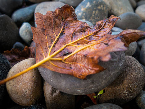 Drying Leaf by Mike Lee