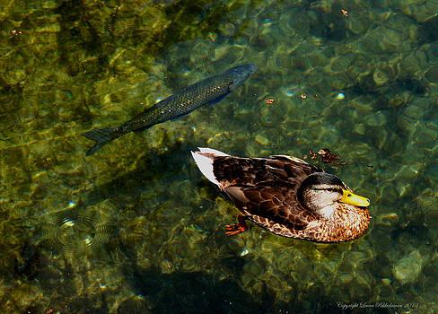 Duck and Fish by Leena Pekkalainen