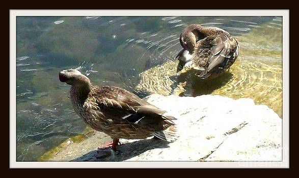 Gail Matthews - Duck Bath