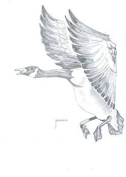Duck by Foqia Zafar