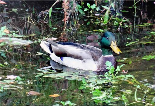 Duck in Pond by Mikki Cucuzzo