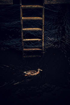 Karol  Livote - Duck Ladder