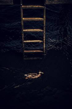 Karol Livote - Duck Ladder
