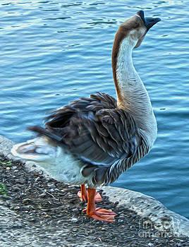 Gregory Dyer - Duck near Blue Water