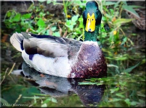Duck Portrait by Mikki Cucuzzo