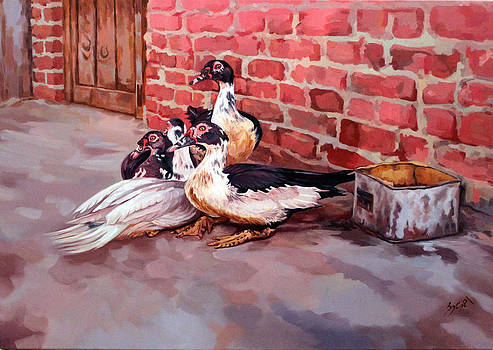 Ducks  by Ahmed Bayomi
