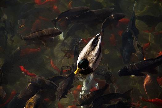 Ducks and Fish by Bonita Hensley