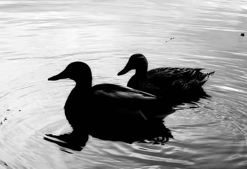 Ducks by Greg Bush