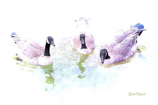 Ducks by Gunter Nezhoda