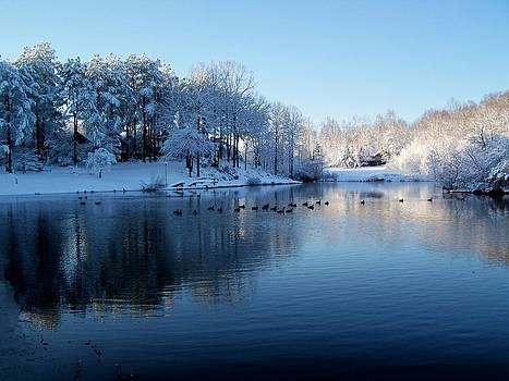 Ducks in a Snowy Lake by Robert Pennix