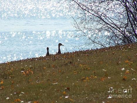 Ducks by Susan Saver