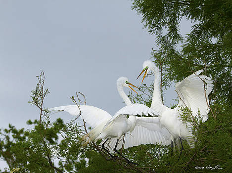 Dueling Egrets by Kathy Ponce