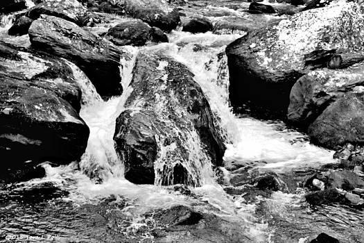 Duke's Creek near Anna Ruby Falls by Tara Potts