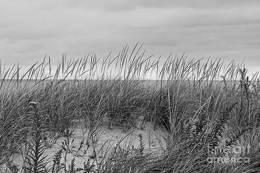 Dunes by Denise Pohl