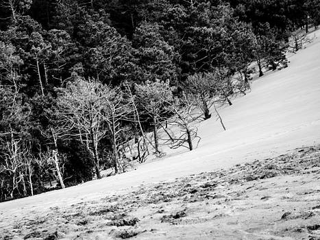 Dunes or Trees by Celso Bressan