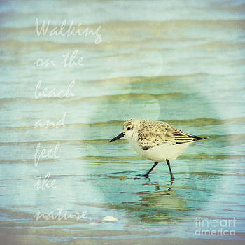 Angela Doelling AD DESIGN Photo and PhotoArt - Dunlin