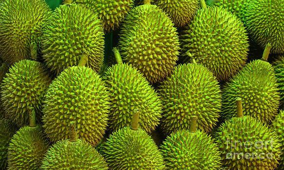 Durian by Ranjini Kandasamy